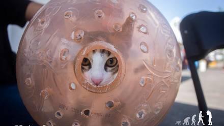 Gato en transportadora hecha con un garrafón
