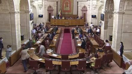 Rata en Parlamento de Andalucía