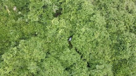 Dron halla a adulto mayor desaparecido