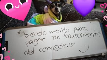 La usuaria 'Merry Cherry' asegura que su perro escribió un letrero