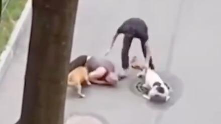 Hombre protege a su perro del ataque de dos perros grandes
