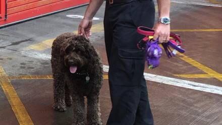 'Digby', el perro de terapia que salvó a una mujer del suicidio