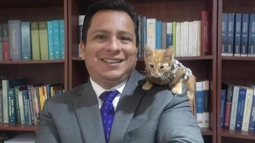 Gatito rescatado se convierte en el 'mejor' abogado de un despacho