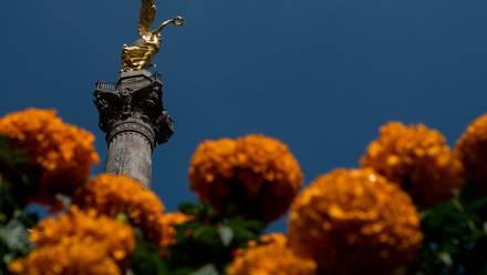 Flores de cempasúchil en el Ángel de la Independencia