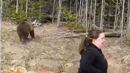 Mujer encarcelada por acercarse a osos grizzly
