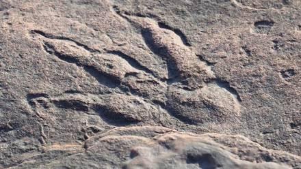Huella de dinosaurio