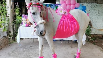 La yegua en su 'baby shower'