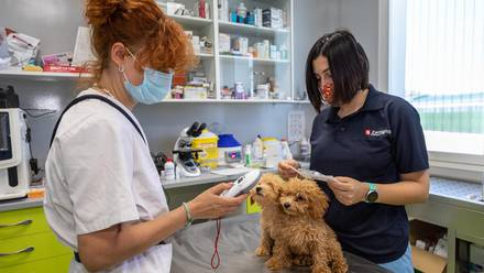 vacuna animales
