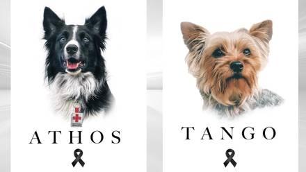 Athos y Tango