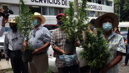 Buscan campesinos de Tetecala permisos para sembrar, cultivar y comercializar marihuana